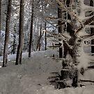Winter Hike by Jane Best