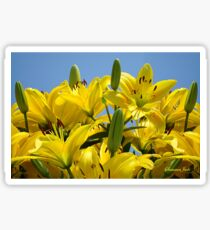 Yellow Lilies Sky High Sticker