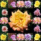 Sommer-Rosen-Collage von BlueMoonRose