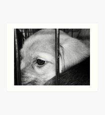 Abandoned Puppy Art Print