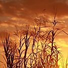 Seeds of Sunset by Bob Hardy