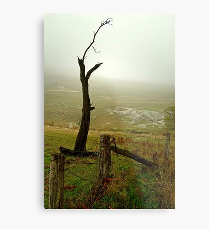 Macendon Ranges,A Damp Foggy Morning Metal Print