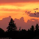 Sunset Wallpaper by rocamiadesign
