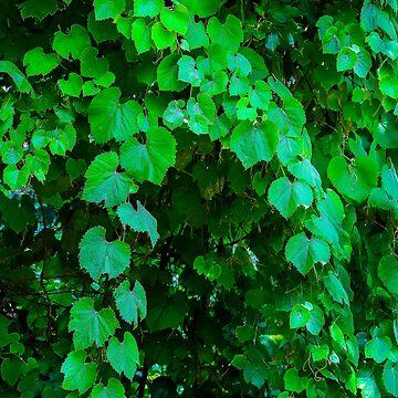 Just Leaves by heatherfriedman