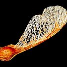 Sycamore Seed Pod by AnnDixon