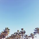 Palm Forest by Cassia Beck