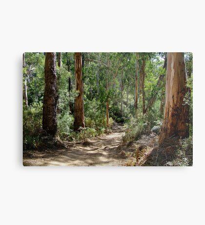 Newcomb Spur Track,Otway Ranges. Metal Print