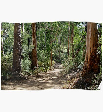 Newcomb Spur Track,Otway Ranges. Poster