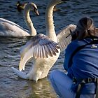 Swan Goes In for the HUG by TJ Baccari Photography