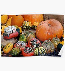 A variety of Pumpkins Poster