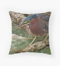 A close up of Stalking  (Lovers Key Florida) Throw Pillow
