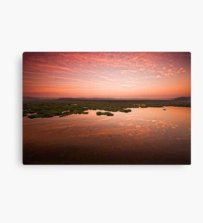 Desperate dawn Canvas Print