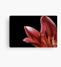 Lilly Light Canvas Print