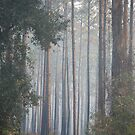 Early Morning Forest Sunrise by rd Erickson