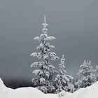 Winter's Painted Tree by Alla Gill