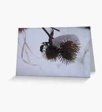 Burdock Greeting Card