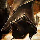 Flying Fox by Gregory Colvin