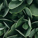 Green Succulent Plant by DagnyK