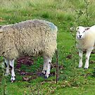 We See Ewe  by Lesliebc
