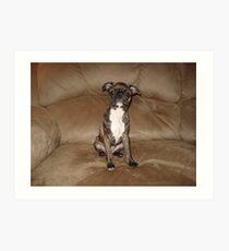 Half Boston Terrier &  Half Pug Art Print