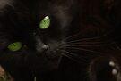 Green Eyes by Kerensa Davies