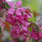 Spring Blossom in Devon by lezvee