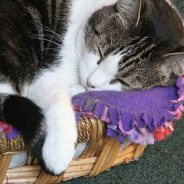 Sophia Sleeping Warm and Snug by heatherfriedman