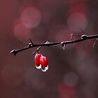 Winter Berries by Tracy Friesen
