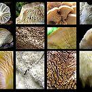 2015 Mushroom & Fungi Beauty by Carla Wick/Jandelle Petters