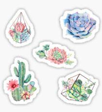 Aquarell-Kaktus-Packung Sticker