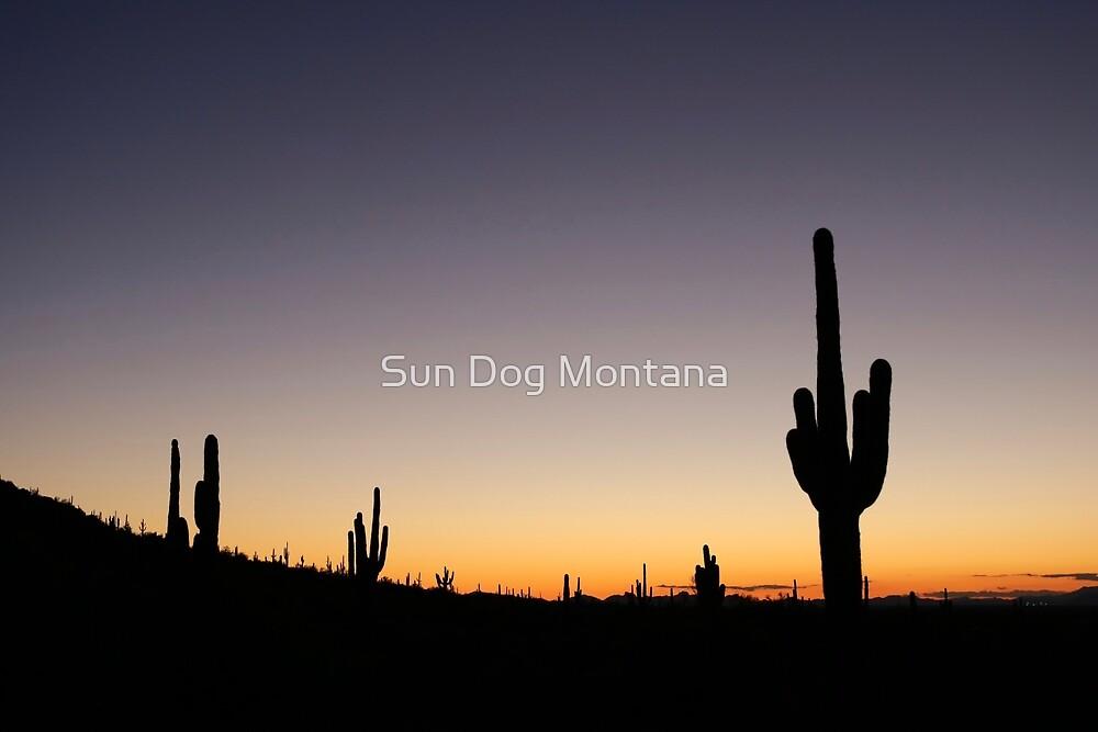 Sonoran Sunset by Sun Dog Montana