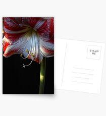 Amarillis In Bloom Postcards