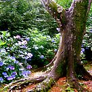 enchanted forest by HeatherMScholl