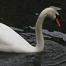 White Swan by Snowkitten