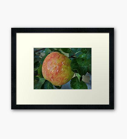 An apple a day..... Framed Print