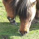 New Forest Ponies by Snowkitten