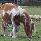 Grazing Pony by Snowkitten