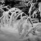Winterland 8 by Veikko  Suikkanen