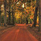 Autumn in Bridgetown, Western Australia by Elaine Teague