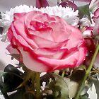 Elegant rose  by sabelacarlos