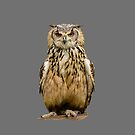 Female Indian Eagle Owl by Dave  Knowles