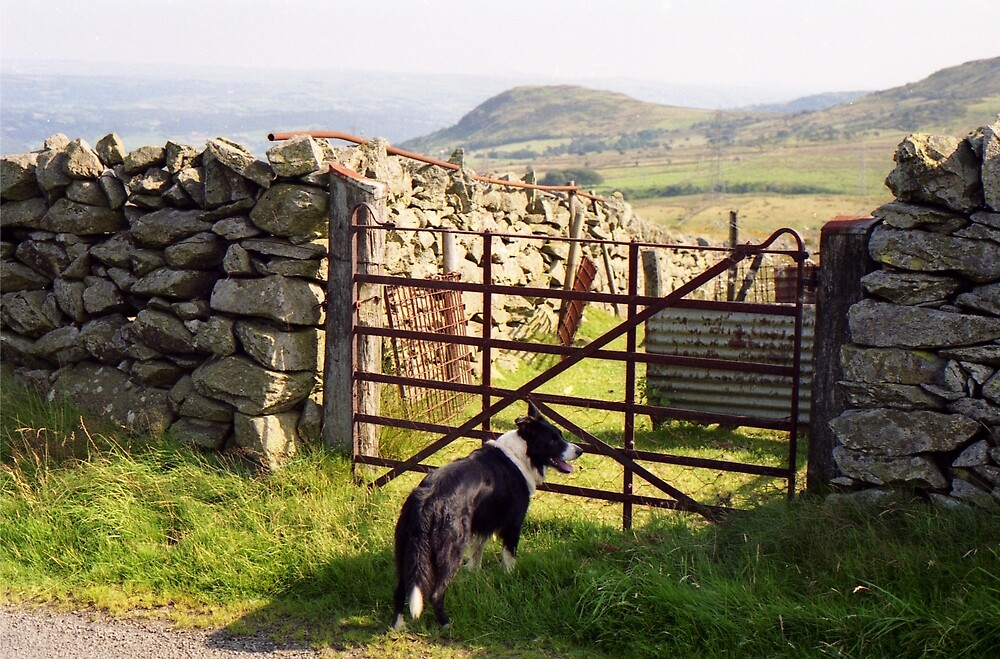 A day in the country with Young Indy. by Michael Haslam