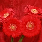 Gerbera All in Red by AnnDixon
