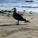 Seagull by Dalmatinka