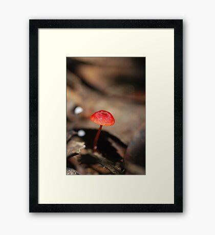 """Mycena viscidocruenta aka """"Ruby Bonnet"""" Framed Print"""