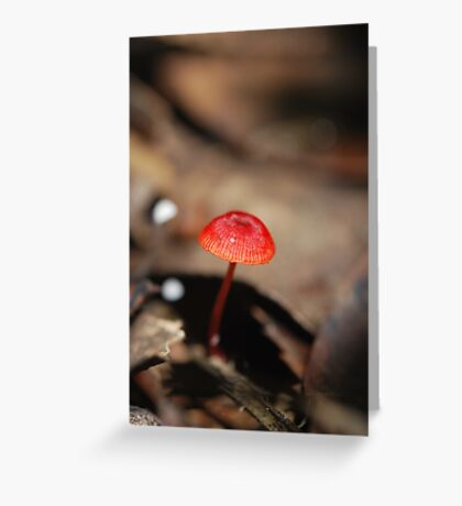 "Mycena viscidocruenta aka ""Ruby Bonnet"" Greeting Card"