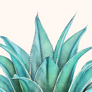 Agave by CatyArte