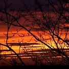 bonnie winter sunset no.2 by Babz Runcie