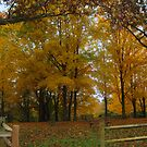 Remembering Autumn by Virginia Shutters