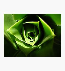 the green beauty Photographic Print